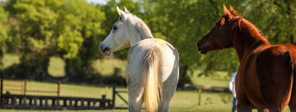 Beautiful Horses at Quail Run Farm